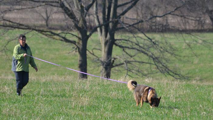 dog tracking with handler