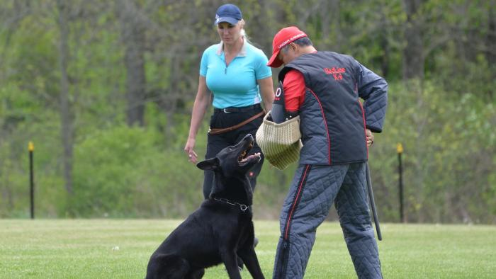 Marvin - 2016 Ontario Regionals with Champion Checker & Shanon